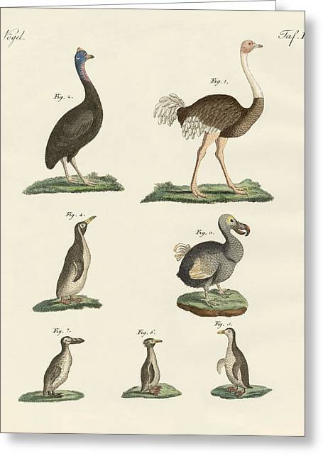 Tiere Greeting Cards - Birds Greeting Card by Splendid Art Prints