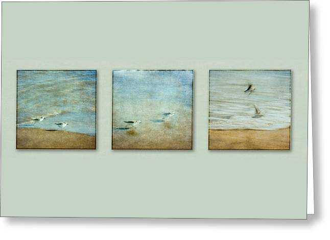 Flying Seagull Greeting Cards - Birds Take Off Sequence Greeting Card by Eduardo Tavares