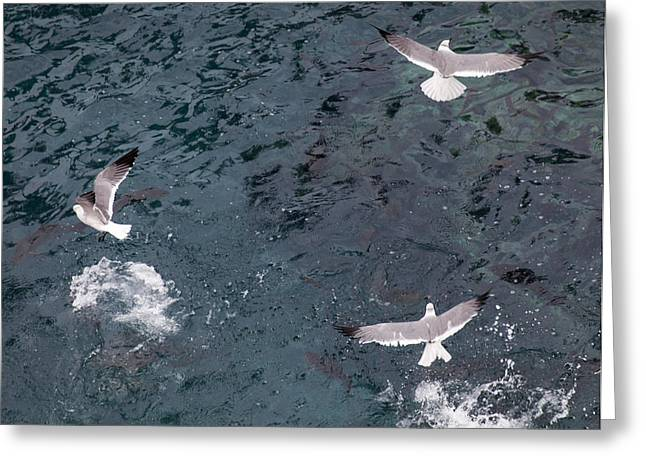 2013 Digital Art Greeting Cards - Birds Taking Advantage of Feeding Time  Greeting Card by Susan Stone