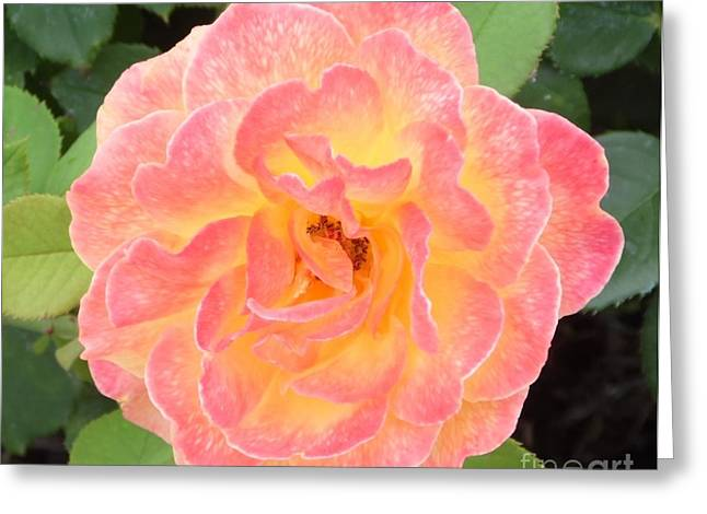 Lead The Life Greeting Cards - Birthday Rose Greeting Card by Melissa Baker