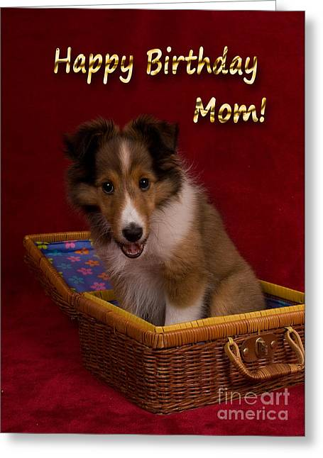 Wildlife Celebration Greeting Cards - Birthday Sheltie Puppy Greeting Card by Jeanette K