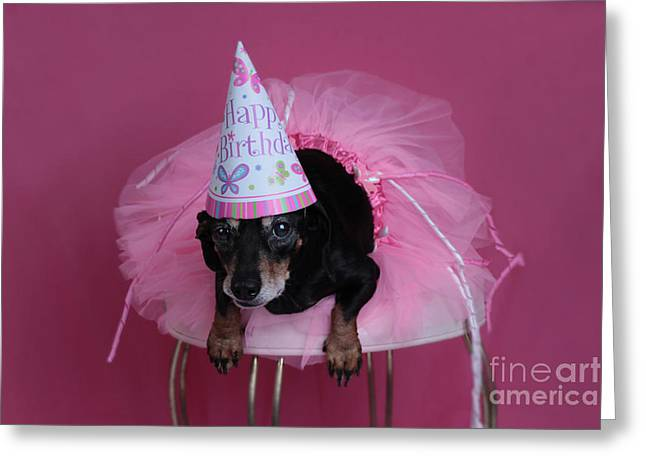 Black And Tan Dachshund Greeting Cards - Birthday Surprise Greeting Card by Denise Oldridge