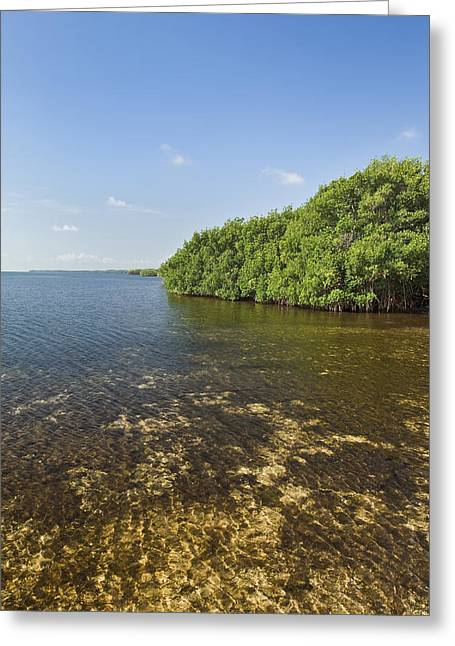 Biscayne Bay Greeting Cards - Biscayne Bay Coast 1 Greeting Card by Patrick M Lynch