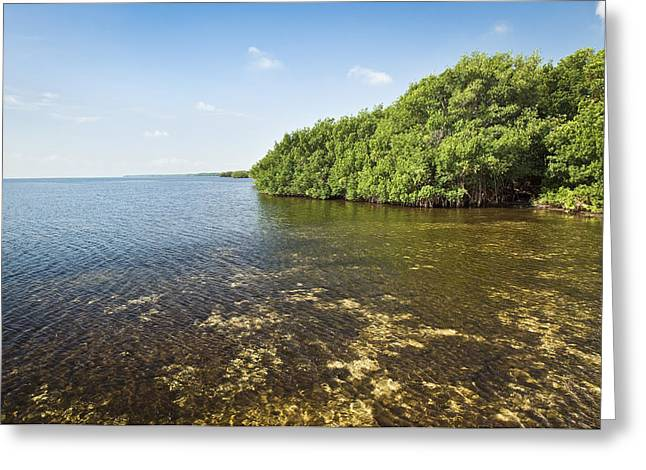 Biscayne Bay Greeting Cards - Biscayne Bay Coast 2 Greeting Card by Patrick M Lynch