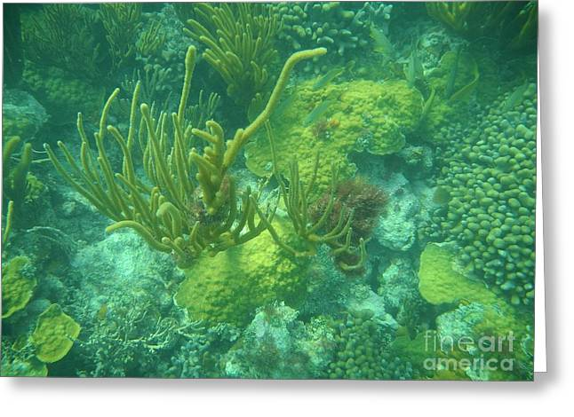 Reef Photos Greeting Cards - Biscayne Forest Greeting Card by Adam Jewell