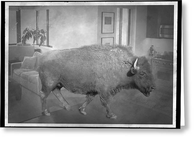 Bison At Home Greeting Card by Flo Karp