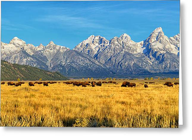 Grand Teton Greeting Cards - Bison Beneath The Tetons Panorama Greeting Card by Greg Norrell