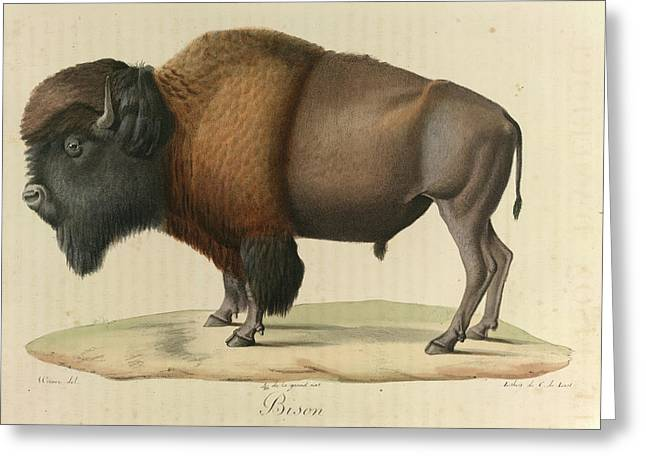 Bison Greeting Card by British Library