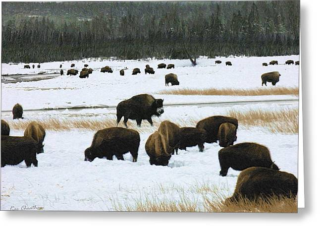 Kae Cheatham Greeting Cards - Bison Cows Browsing Greeting Card by Kae Cheatham