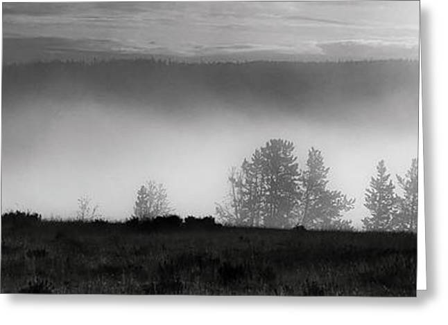 Yellowstone Greeting Cards - Bison emerge from the fog in Yellowstone Greeting Card by Shane Linke