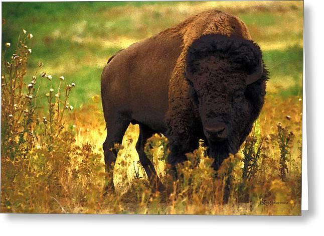 Bison Mixed Media Greeting Cards - Bison Greeting Card by EricaMaxine  Price