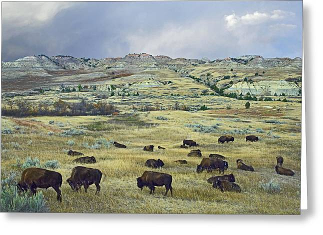 A. Paré Greeting Cards - Bison Herd On Praire Theodore Roosevelt Greeting Card by Tim Fitzharris