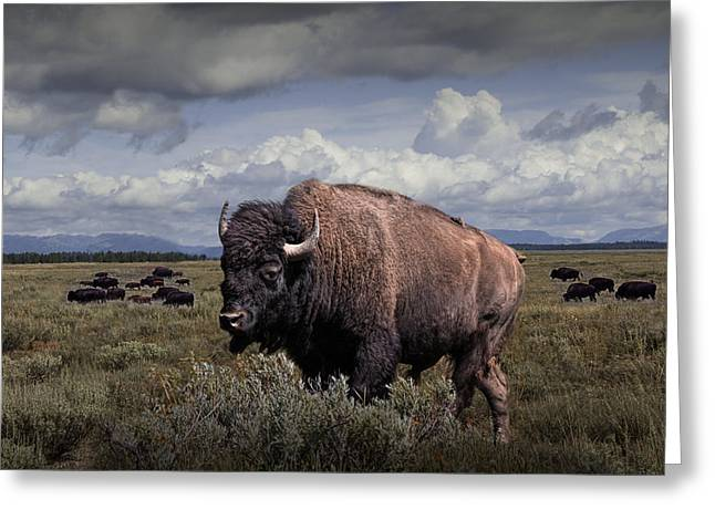 Cattle Photographs Greeting Cards - Bison in the Grand Tetons Greeting Card by Randall Nyhof