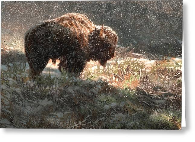 Aaron Greeting Cards - Bison in the Snow Greeting Card by Aaron Blaise