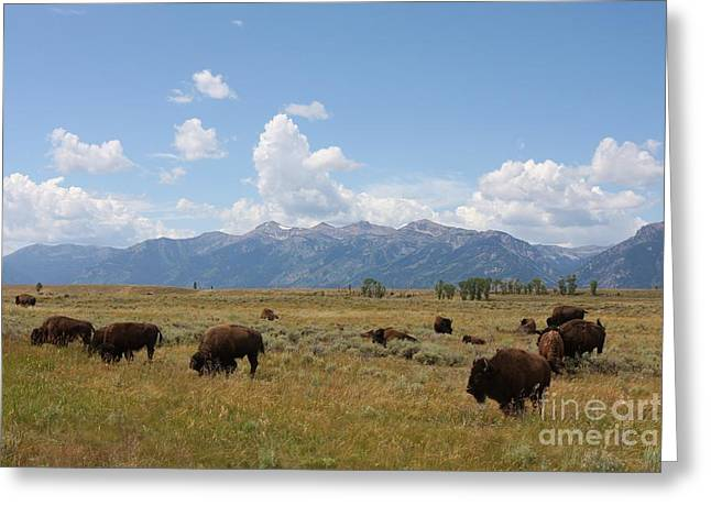 Male Native American Standing Greeting Cards - Bison Roaming the West Greeting Card by Tammy Venable