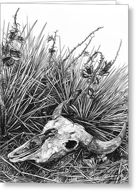 Cowboy Sketches Greeting Cards - Bison Skull Greeting Card by Aaron Spong