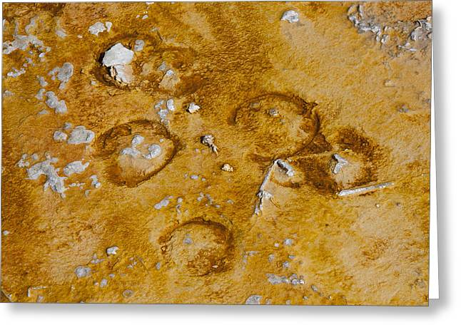 Recently Sold -  - Algae Greeting Cards - Bison Tracks in Thermal Pool Greeting Card by David M Porter