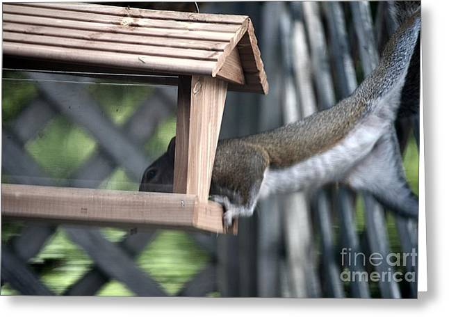 Animals Love Greeting Cards - Bit of a Stretch Greeting Card by JW Hanley