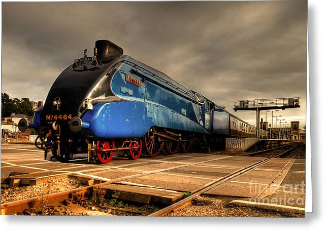 Express Greeting Cards - Bittern at Exeter St Davids  Greeting Card by Rob Hawkins