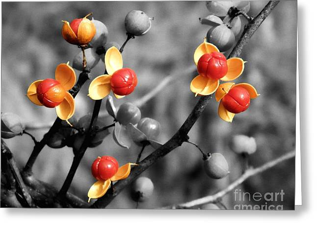Oriental Bittersweet Greeting Cards - Bittersweet Berries Greeting Card by Sharon Woerner