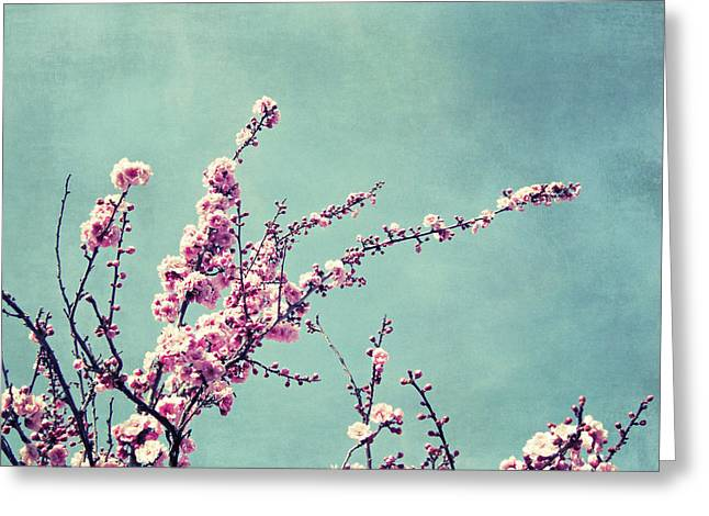 Pink Blossoms Greeting Cards - Bittersweet Greeting Card by Lupen  Grainne