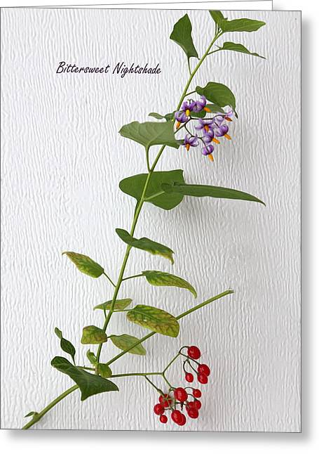 Bittersweet Photographs Greeting Cards - Bittersweet Nightshade Greeting Card by Angie Vogel