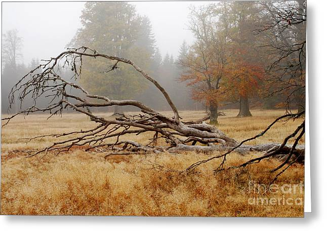 Rootage Greeting Cards - Bizarre Rootage In The Highmoor Greeting Card by Karin Stein