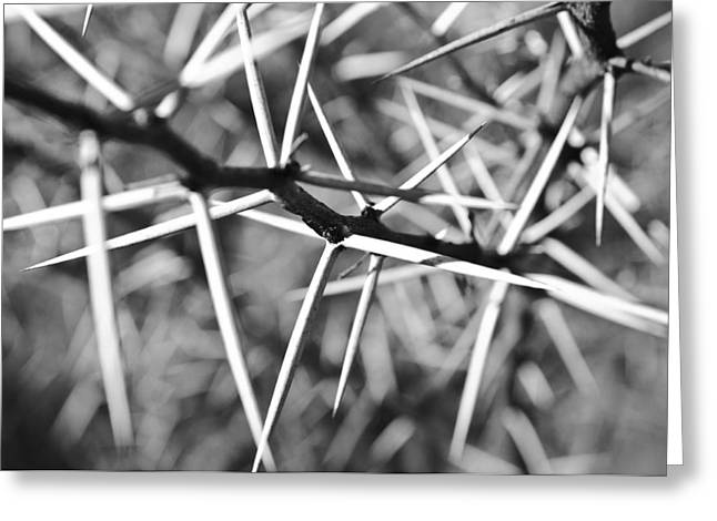 Pahari Greeting Cards - Black and white - Thorns Greeting Card by Andy-Kim Moeller