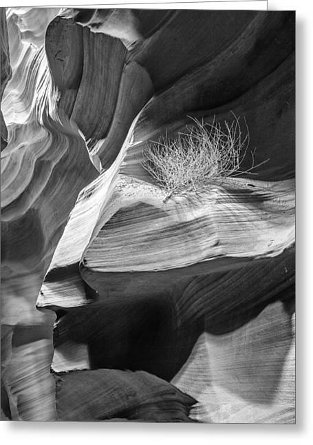 Travel Arizona Greeting Cards - Black and White Antelope Canyon Tumbleweed  Greeting Card by Susan  Schmitz