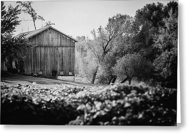 White Barns Greeting Cards - Black and White Barn Landscape - In the Vineyard Greeting Card by Lisa Russo