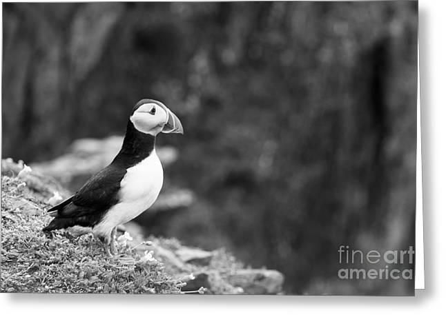 Black And White Black And White Bird Greeting Card by Anne Gilbert