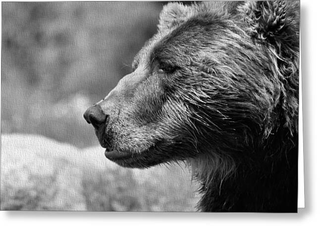 Kodiak Greeting Cards - Black And White Brown Bear Greeting Card by Dan Sproul