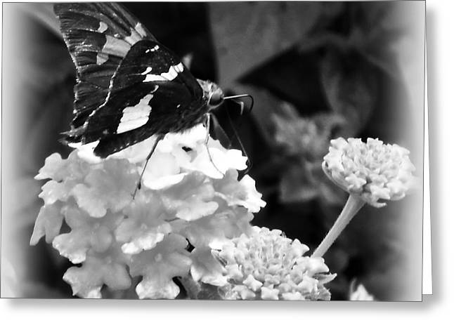 Black And White Butterfly Greeting Card by Eva Thomas