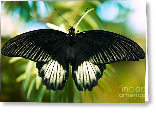 Commercial Photography Greeting Cards - Black and White Butterfly Greeting Card by Iris Richardson