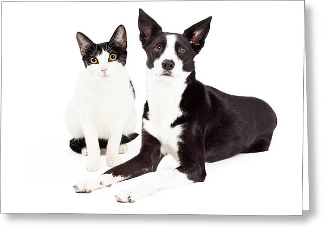 Black And White Cat And Dog Greeting Card by Susan  Schmitz