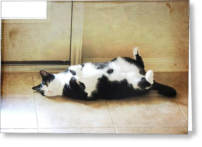 American Shorthair Greeting Cards - Black and White Cat Reclining Greeting Card by Jayne Wilson