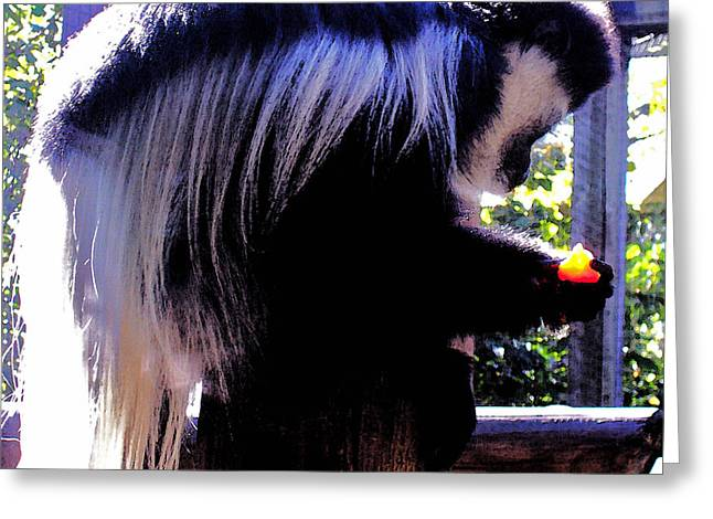 Forest Dweller Greeting Cards - Black and White Colobus Monkey Greeting Card by Shawna  Rowe