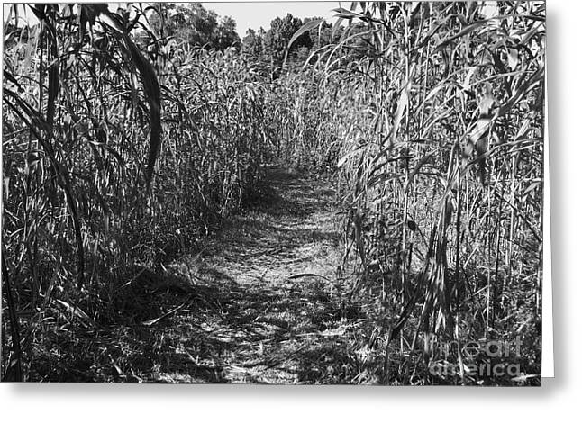 Hayride Greeting Cards - Black and White Corn Maze Greeting Card by D Hackett