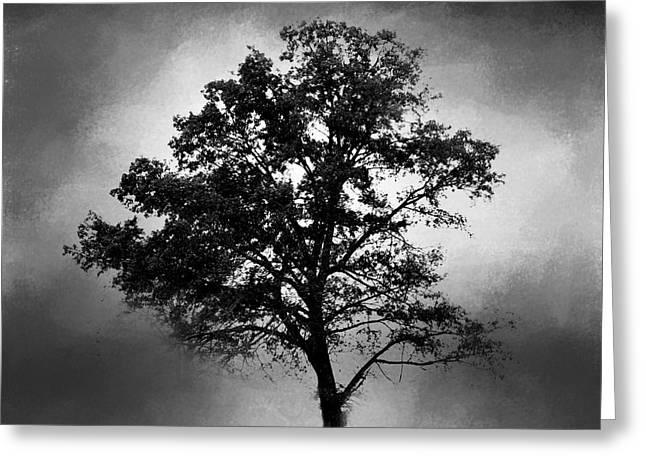 Artistic Photography Greeting Cards - Black and White Cotton Field Tree Greeting Card by Jai Johnson