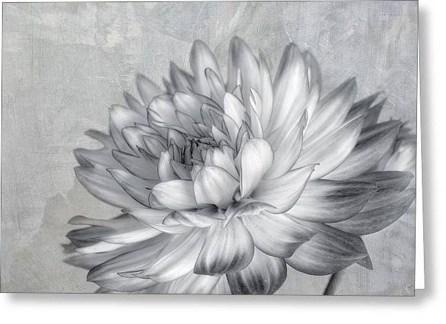 Kim Photographs Greeting Cards - Black and White Dahlia Greeting Card by Kim Hojnacki