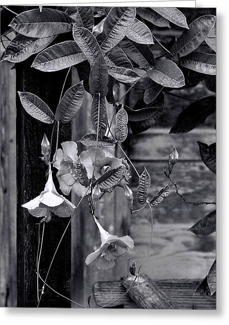 Vine Leaves Greeting Cards - Black and White Floral Greeting Card by Linda Phelps