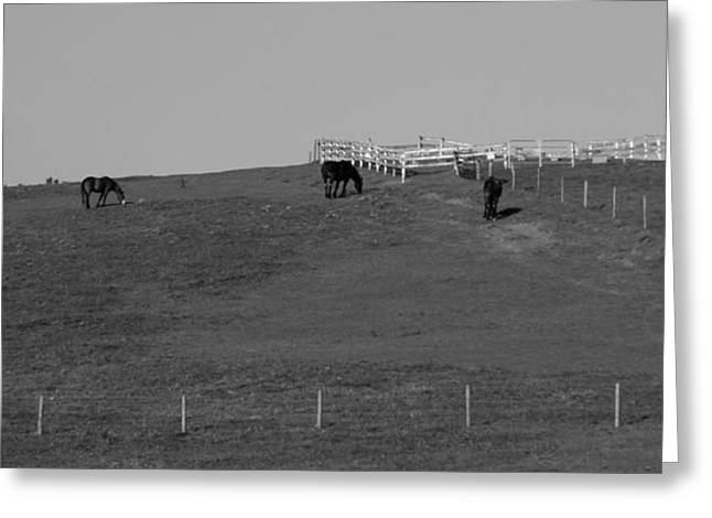The Hills Greeting Cards - Black And White Horses On The Hill Greeting Card by Dan Sproul