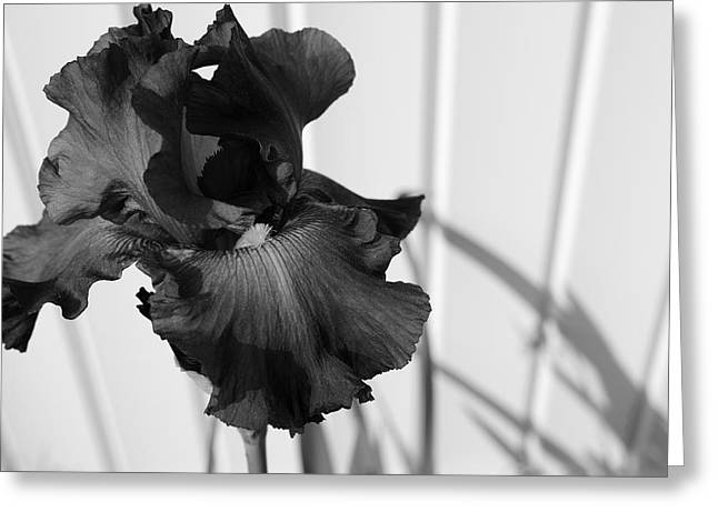 Interior Still Life Photographs Greeting Cards - Black and White Iris Greeting Card by Luke Moore