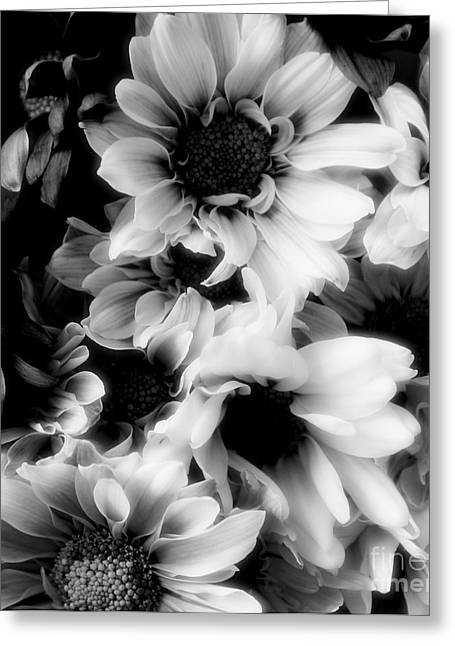 Struckle Greeting Cards - Black And White Greeting Card by Kathleen Struckle