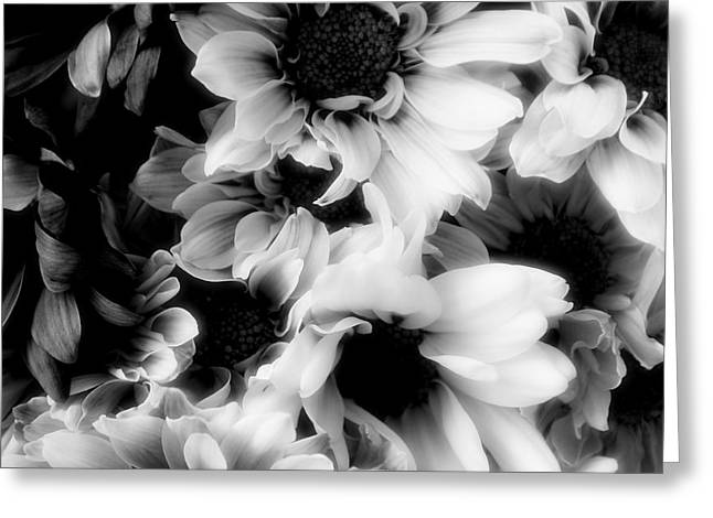 Shower Curtain Greeting Cards - Black And White Greeting Card by Kathleen Struckle