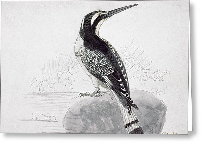Black And White Kingfisher Greeting Card by Thomas Bewick