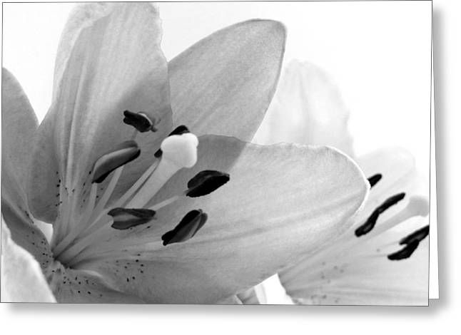 Dot Greeting Cards - Black and White Lilies Greeting Card by Marianna Mills
