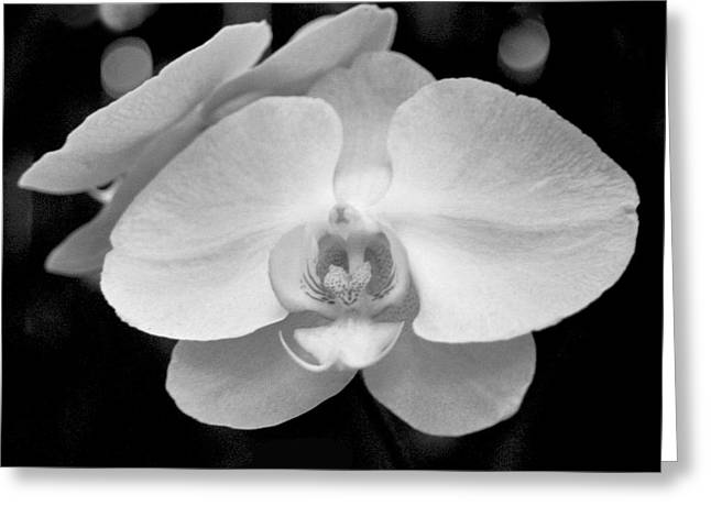 Heather Kirk Greeting Cards - Black and White Orchid with Lights - SQUARE Greeting Card by Heather Kirk