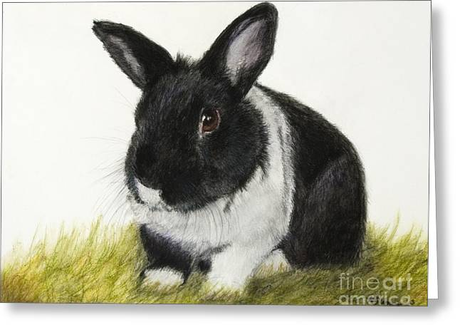 Rabbit Pastels Greeting Cards - Black and White Pet Rabbit Greeting Card by Kate Sumners