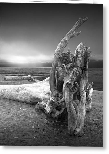 Foggy Beach Greeting Cards - Black and White Photograph of Driftwood on the Beach Greeting Card by Randall Nyhof